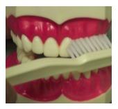 brushing-technique